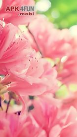 spring wallpapers for chat