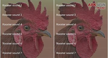 Rooster sounds